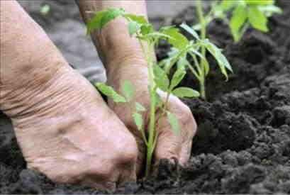 Nota esplicativa in merito al decreto 99 del 16 aprile 2020: chiarimenti relativi alle attività di cura e manutenzione del paesaggio e di orti